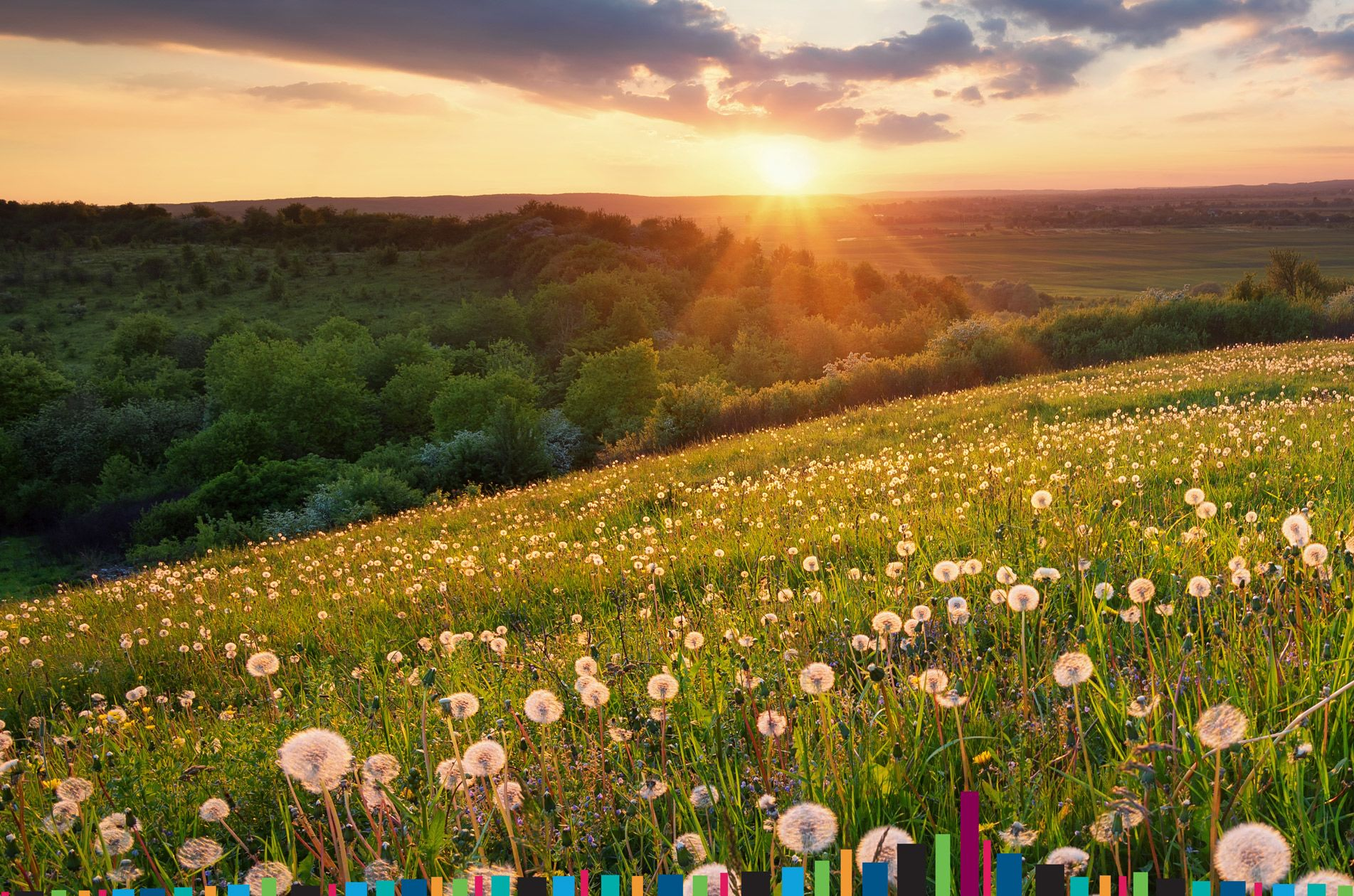meadow with flowers and sunset